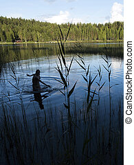 silhouette of bathing girl in finnish lake at sunset