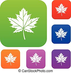 Maple leaf set collection - Maple leaf set icon in different...