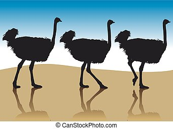 Ostrich in profile - Several ostrich silhouettes in going to...