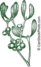 Vector Mistletoe - Detailed vector mistletoe graphic