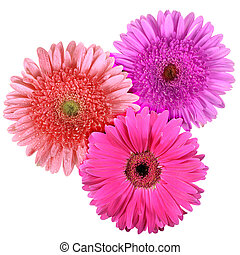 Set of three flowers isolated on white background Close-up...