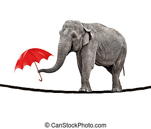 Tightrope walking elephant - A young circus elephant walking...