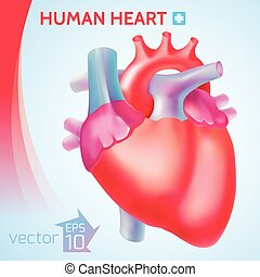 Healthy Organ Background - Healthy organ background with...