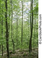 Dichter Wald im Schwarzwald Hochformat