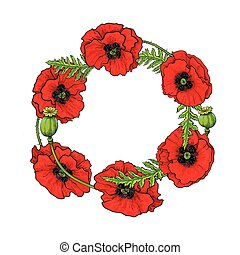 Vector red poppy flower blossom blooming template. - Vector...