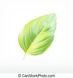 Green basil leaf. Vector icon isolated on white. EPS10...