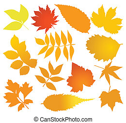 Set of autumn leaves of different trees. A vector illustration