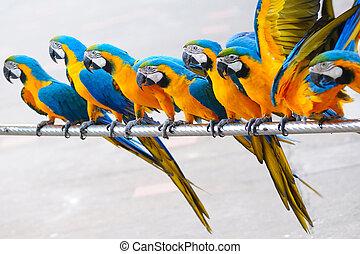 Papagaio, Pássaros