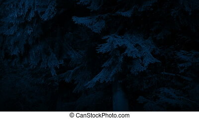 Big Trees In Gentle Breeze At Night - Large old forest trees...