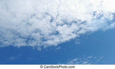 Birds Swooping Around The Sky - Wide view of blue sky with...