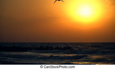 Beautiful sea sunset and seagulls flying across the sky.