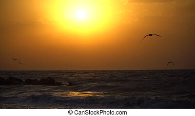 Beautiful sea sunset and seagulls flying across the sky