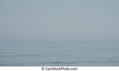 Slow motion of a lonely seagull flying above the Baltic sea....