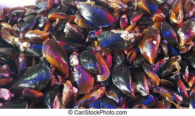 Fresh Seafood Mussels on the Counter of the Fish Store -...