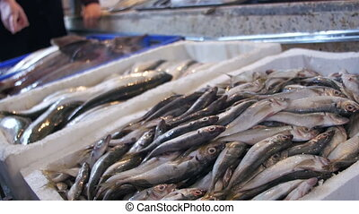 Fresh Sea Fish on the Counter of the Fish Store. Seafood...