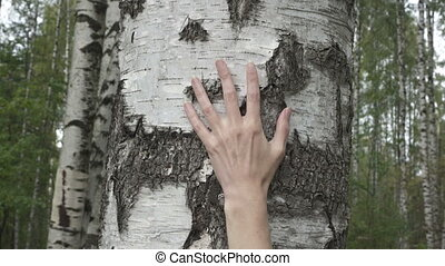 The female hand moves along a birch trunk in the birch wood,
