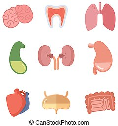 Human internal organs on white background. Vector icons set in cartoon style