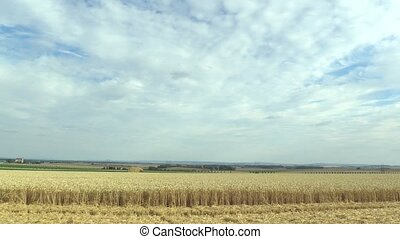 Beautiful Hana landscape of countryside, fields with wheat gold timelapse