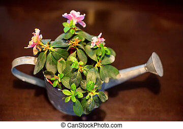 Watering pot with flowers inside - Close up small beautiful...
