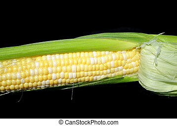 Ear of Corn Over Black