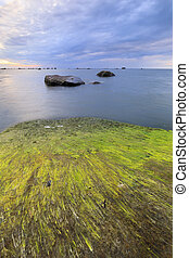 Algaes on large rocks in sea at cloudy evening - Large rocks...
