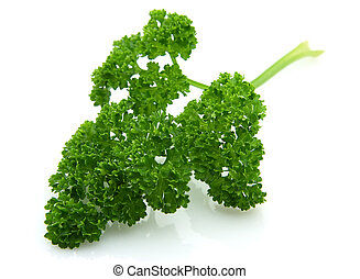 Parsley branch - Branch of magnificent parsley on a white...