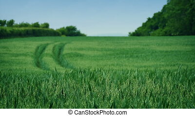 Field On Sunny Day - Field on breezy sunny day