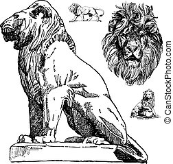 Vector Lions - Set of lion graphics