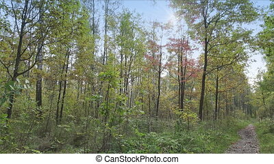The deciduous wood in sunny autumn day,