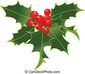 Holly berry - Holly berry isolated on white background