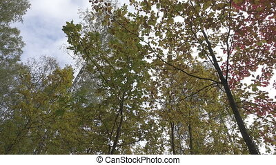 The deciduous wood on autumn day - The deciduous wood in...