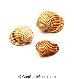 shells isolated