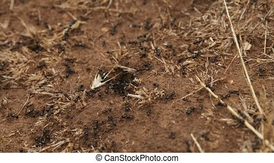 Crawling ants after rain on the soil, seamless footage