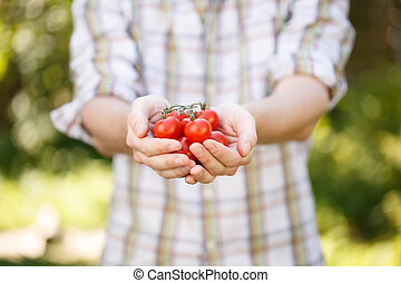 Young agronomist in plaid shirt with cherry tomatoes in...