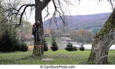 Lumberjack with saw and harness climbing a tree. -...