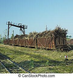 cheio,  Cuba,  niquero, Açúcar, estrada ferro, Vagões, cana