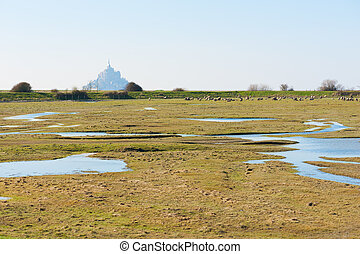 Mont Saint-Michel and sheeps in a meadow