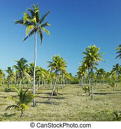 Cuba, parque, Nacional, del, granma, desembarco, granma,...