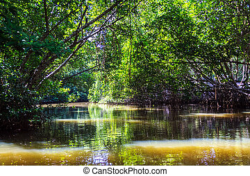 Bentota river among the Jungle at sunny day - The Bentota...