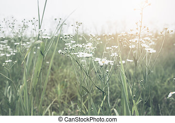 Flower grass with solar vintage style.
