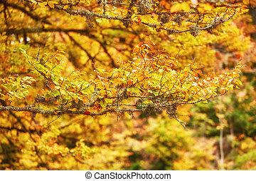 Autumn tree with yellow fall leaves