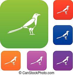Bird magpie set collection