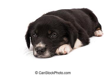 Black white dog isolated on white background