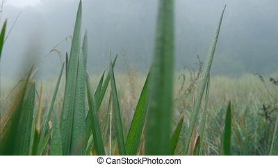 Movement through grass in misty, rainy forest. Dense fog in...