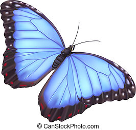 Blue morpho butterfly - illustration of a beautiful blue...