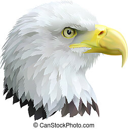 Eagle - Illustration of a eagles head in profile.