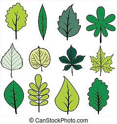 Set of green leaves on white background