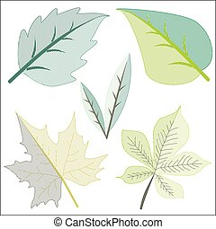 Different Leaves in Clip Art