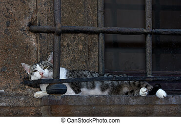 Cat Nap, Nepi Italy - Cat having an afternoon nap on a...