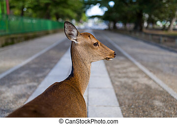 Cute Wild deer in Nara park